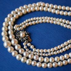 Two strands necklace with genuine salt water very shiny pearls from Japanese sea and 18kt. White gold flower clasp with Sapphires.
