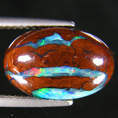Fine Australian Boulder  Opal With  Flash - 14.03 x 9.07 x 5.03 mm - 6.58 ct