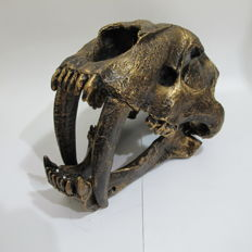 Full-sized Sabre-toothed Tiger replica skull - 35 x 20 x 18.5cm - 2kg