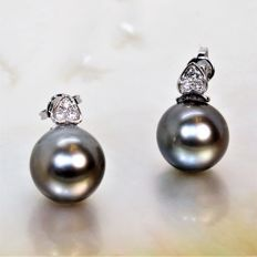 Diamond earrings with round cultured Tahitian pearl, Ø 11 x 12 mm - 18 kt Grey Gold.