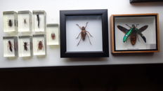 Small mixed collection of Insects - cased, and in Lucite - 7 x 4cm and 13 and 16cm  (9)