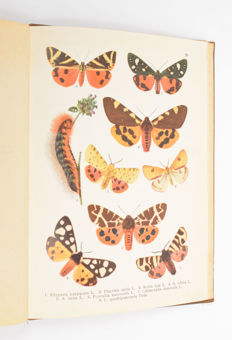 Lot with 6 publications about beetles and butterflies - 1893/1971
