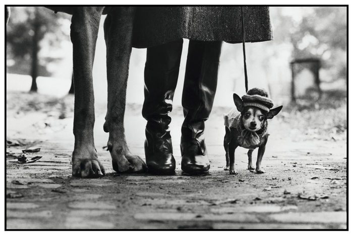 Elliot Erwitt (1928-) - Felix, Gladys and Rover, 1974