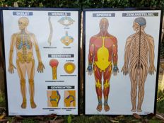 5 antatomische School posters of human body