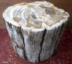 Mini Side Table - Trunk of Petrified Wood - 27 x 28 x 23.5 cm - 30.6 kg