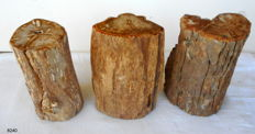3 Trunks of petrified wood - from 160 to 180 mm - 8 kg (3)
