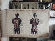 Large Anatomical Map with Human Corpus on Canvas