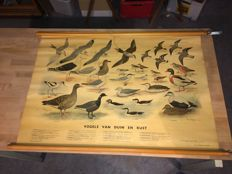 School poster of Birds of dunes and coast on linen H.J. Slijper Thieme & Cie Zutphen