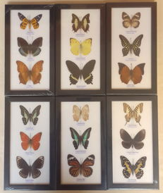 Set of Exotic Butterfly display frames - various species - 25 x 13.5cm  (6)