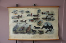 "Linen school poster ""Reed and water birds"""
