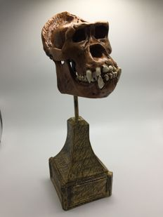 Fine, 1/3rd size replica Gorilla skull, with matching stand - 11 x 7.5cm - 860gm