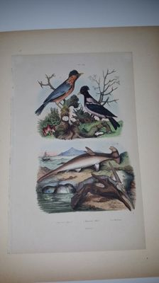 10 original antique natural history hand-coloured engravings