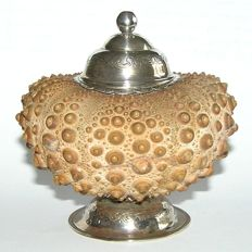 A Grand Tour fossil Sea Urchin with silver mounting as a box - presumably Italy - late 18th century