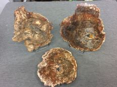 Lot of slices of petrified wood (3) - 4031 g