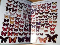 Lot with 5 excellent books about butterflies and moths, one antiquarian, all standard works - 1897/1977
