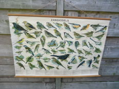 Songbirds (school poster).