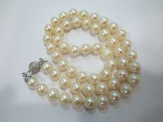 Beautiful Akoya cultured salt water pearls, 8 mm, with 18 kt gold clasp
