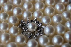 Japanese sea/salty water ivory-white Akoya pearls with a very nice lustre (AAA) aprox. Ø 7.5-7,9mm and white gold 585/14kt. clasp.