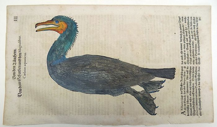 Conrad Gesner (1516-1565) - One folio leaf with large woodcut Ornithology: Birds, Double-Crested Cormorant - 1669