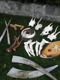 Collection of hunting trophies