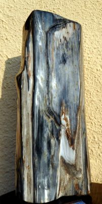 Trunk of petrified wood - 38 cm - 9 kg