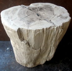 Mini Side Table from Petrified Wood Trunk - 32 x 25 x 15 cm - 14.4 kg