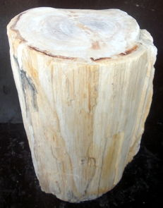 Mini Side Table from a trunk of Petrified Wood Trunk - 33.5 x 18 x 14.5 cm - 12 kg
