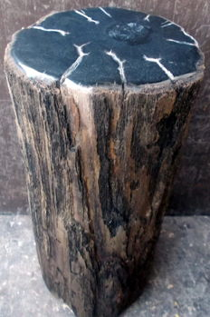 Mini Side table out Petrified Wood - 35 x 14 x 2 cm - 8.8 kg