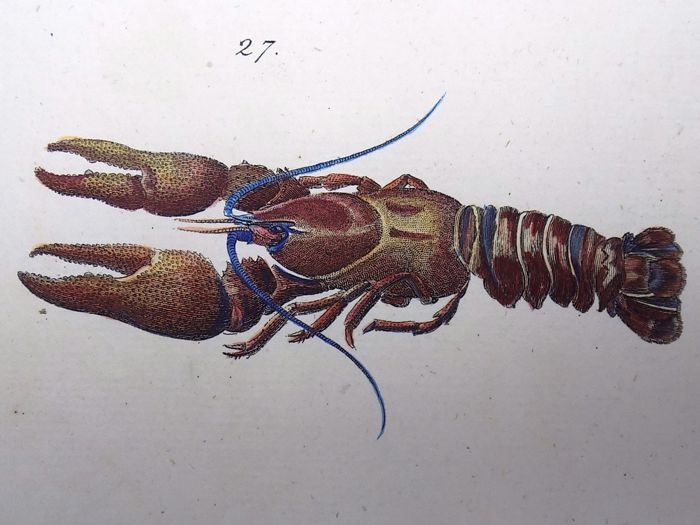 Thomas Pennant (1726-1798) - Craw Fish, Shrimp - fine hand colour - 1768