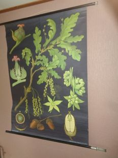 Very beautiful botanical old school poster of the oak