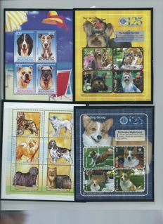 Dog and cat theme - Collection