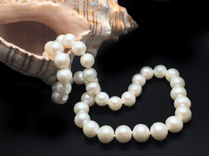 Lustrous 9 x 10mm Freshwater Pearl Necklace with a 14k yellow Silver Clasp - lenght : 45cm