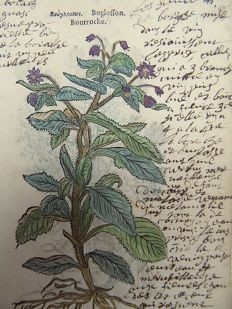 Leonhard Fuchs 1501 - 1566 - 2 botanical woodcuts - Bugloss [ Borage ] - Buphtalmum [ ox-eye ] - With manuscript descriptions - 1549