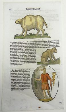 Conrad Gesner (1516-1565) - One leaf with 4 large woodcuts - Domestic Dogs - Monster Dogs - 1669