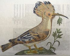 Conrad Gesner (1516-1565) - One leaf with a large woodcut - Ornithology: Hoopoe [ Upupa epops ] - 1669