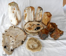 Large lot of Petrified Wood - 12.8 kg (10)