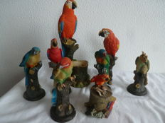 Gorgeous Parrot Family from the Umit Collection