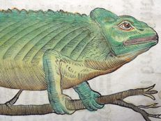 Conrad Gesner (1516 - 1565); folio leaf with 2 large woodcuts - Lizards : Chameleon, Axolotl - 1669