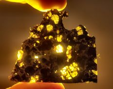 The Wave. An Admire Pallasite Slice - Meteorite -  18,6g