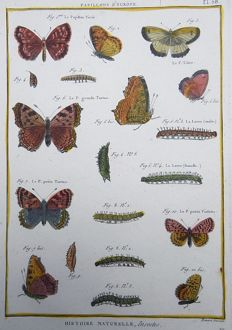 Engraving after Pierre André Latreille (1762 - 1833) by Benard - Butterflies: Papillons d'Europe - 1790
