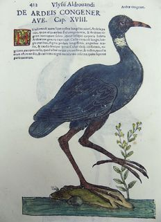 Ulisse Aldrovandi (1522 – 1605) - 2 large hand colored woodcuts - Birds: Wading Bird, Eurasian Bittern - 1637
