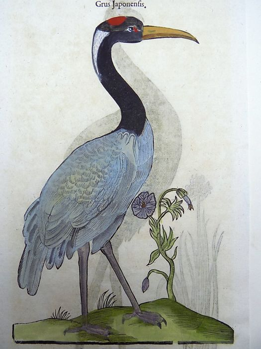 Conrad Gesner (1516-1565) - One leaf with 2 large woodcuts Ornithology: Birds, Japanese Crane, African crowned Crane - 1669