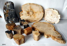12 slices of polished petrified wood - 200 mm - pp mini 50 to 55 mm - slice 180 to 300 mm - 8.4 kg (12)