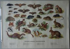 Poster Dutch Mammals - rare version not on linen