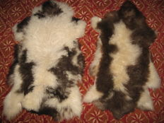 Taxidermy - Jacob Sheep Skins - Ovis aries - 100 x 55cm and 104 x 61cm  (2)