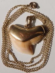 Shark tooth in 18 kt gold mounting and 57 cm 18 kt gold chain