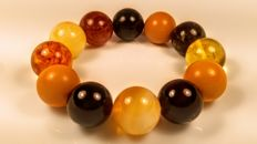 Modified Baltic Amber round mix colours  bracelet, 42 grams