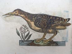 Conrad Gesner (1516-1565) - One leaf with 2 large woodcuts - Ornithology: Red-shank, Sandpiper - 1669