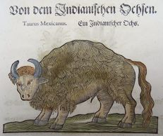 Conrad Gesner (1516-1565) - One leaf with 2 woodcuts - Mexican Bull, Bison; Otter - 1669