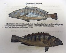 Conrad Gesner (1516-1565) - One leaf with 6 woodcuts on one leaf (rector and verso) - Freshwater fish: Perch, Forkbeard, Phycis - 1669